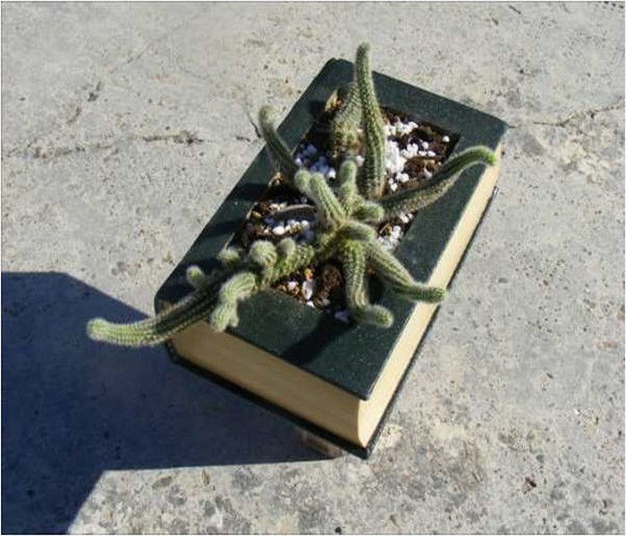 Recycling Old Book Handmade Planter Idea