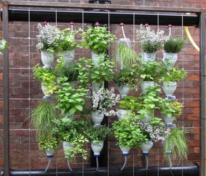 Recycled Plastic Bottles Gardening Idea