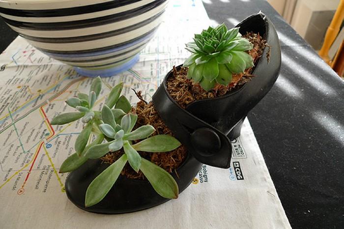 Reuse Shoe Planter