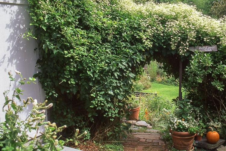 Wonderful Yard Landscaping Ideas