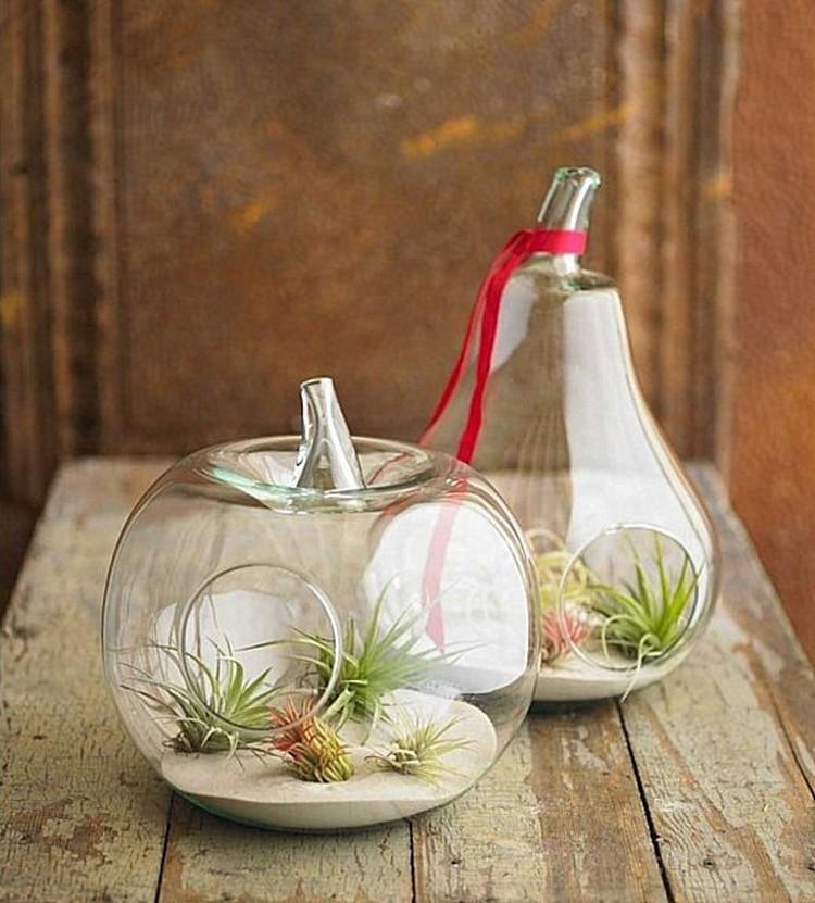 Fruit Shape Terrarium Home Decor Ideas