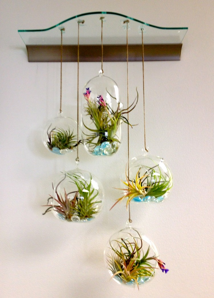 Decorate your home with terrariums recycled things for Plant decorations home