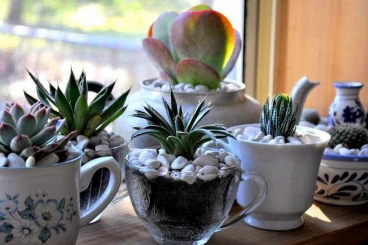 Glass Cup Planters
