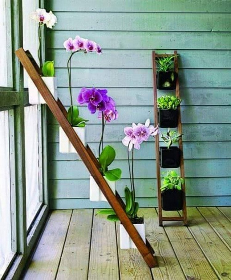 Hanging Plant Projects