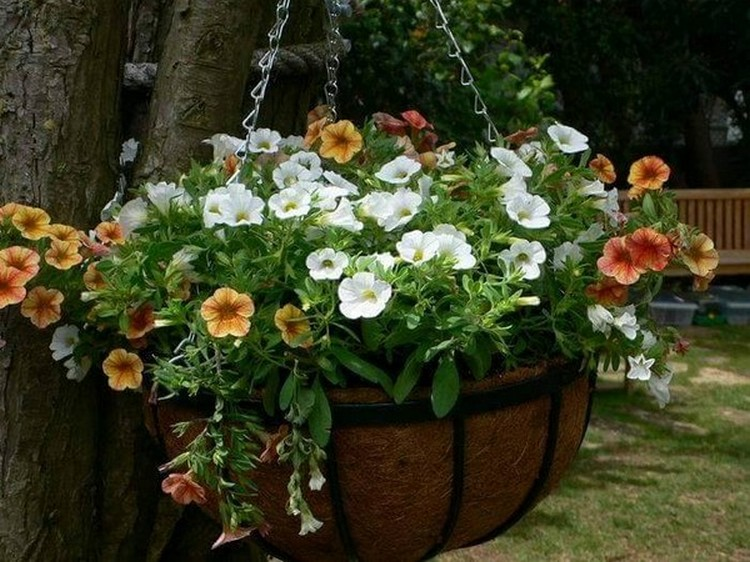Hanging Plants Basket