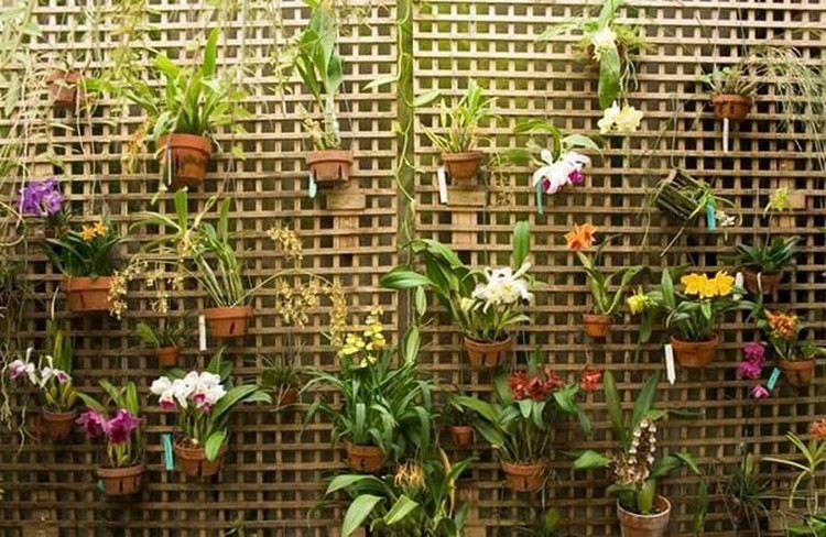 Wall Decor with Hanging Plants