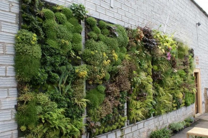 Wall Vertical Gardens