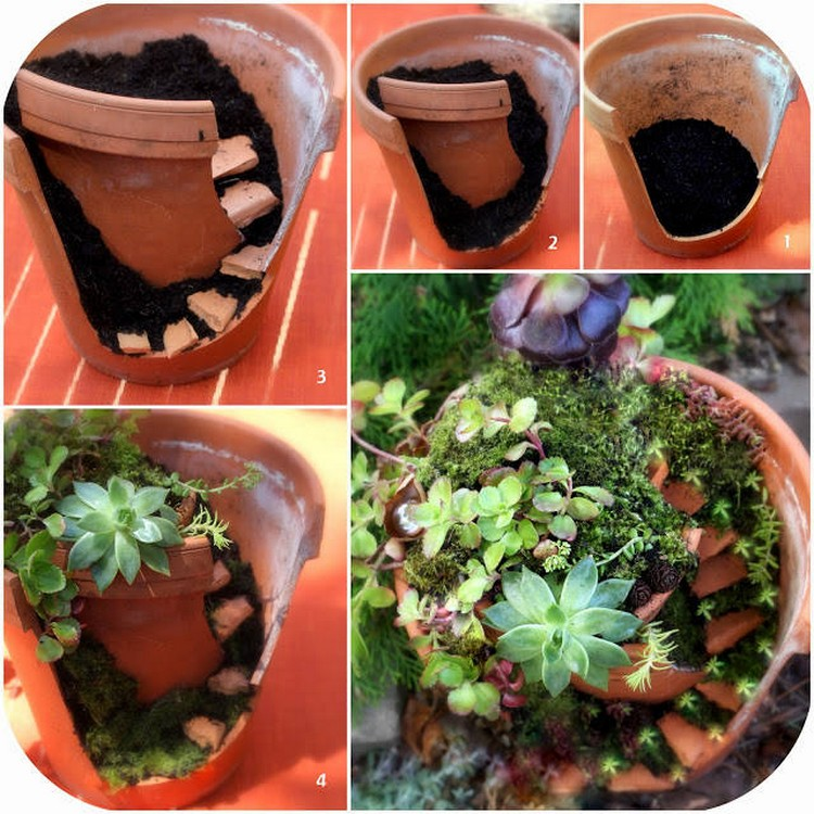 Fairy Gardening with Succulents