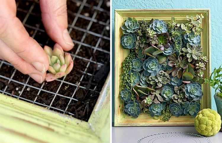 Living Succulent Picture