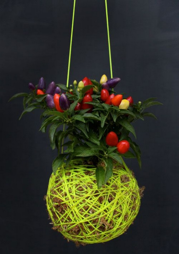 Moss Ball Hanging Plant
